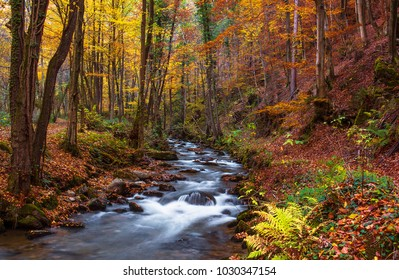 Autumn scene in forest at Bistrica gorge in Slovenia.