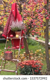 Autumn scene in garden with heather in clay weathered pot, crab apples in cooper bucket, jacket, blouse on  rusty old aged stepladder on tree background, vintage style, vertical photo, daylight