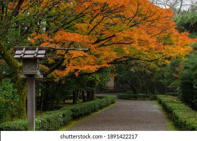 Autumn scene at Ise Jingu (Naiku), a Shinto shrine dedicated to the sun goddess Amaterasu, view of garden along the path leading to the inner shrine, Ise (Ujiyamada), Mie, Kii Peninsula, Kansai, Japan