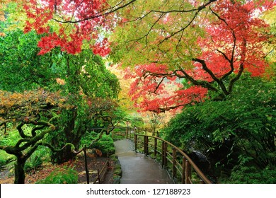 autumn scene of Japanese maples in Japanese Garden of the national historical site Butchart Gardens, Vancouver island, British Columbia, Canada