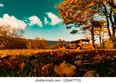Autumn scene and leaves from Abant Golu / Bolu