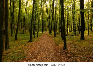 Autumn scene with leaves covered trail in middle of forest.