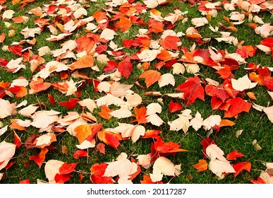 Autumn scene of many red, orange, and yellow leaves on short green grass