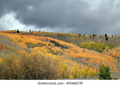 Autumn scene of  mountain-side covered with yellow, gold and orange trees in foreground with dark clouds and sliver of blue sky  in  background.