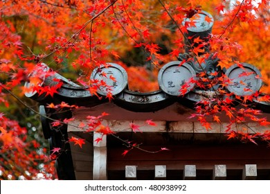 Autumn scene of Nison-In Buddhist temple in Arashiyama, Kyoto, Japan, with fiery maple foliage over the roof & fallen leaves on the eaves of a Japanese architecture in a peaceful, zen-like atmosphere