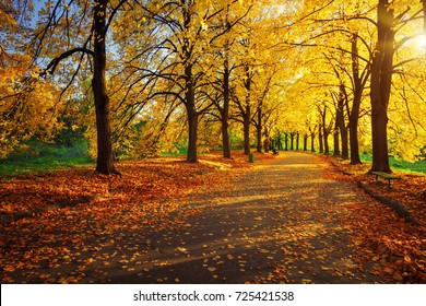 autumn scene in park with yellow trees and sun light