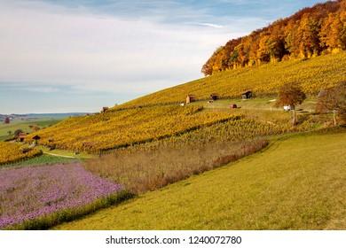 Autumn scene in the vineyard region Klettgau, Switzerland