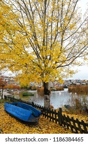 Autumn scene with yellow fall leaves tree a blue wooden boat and as background lake and town Kastoria in Greece