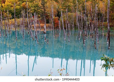 Autumn scenery of Aoi-Ike (Blue Pond) with beautiful fall colors on the lakeside hills reflected in the green water and the dead tree trunks standing in the lake, in Biei, Hokkaido, Japan - Shutterstock ID 1990444403