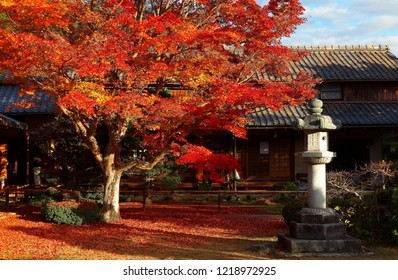 Autumn scenery of a fiery maple tree and a traditional Japanese stone lantern on the ground covered by red fallen leaves under bright sunshine in the courtyard garden of Genkoan Temple in Kyoto, Japan