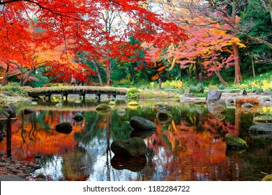 Autumn scenery of fiery maple trees by a wooden bridge reflected in the peaceful water of a pond in Koishikawa Korakuen, a traditional Japanese garden famous for brilliant fall foliage in Tokyo, Japan