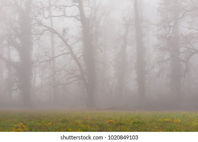 Autumn scenery in the forest, with eerie mist and fog