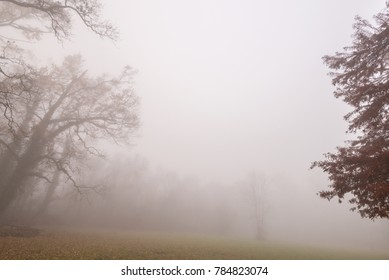 Autumn scenery in the forest with thick fog and a mystery mood