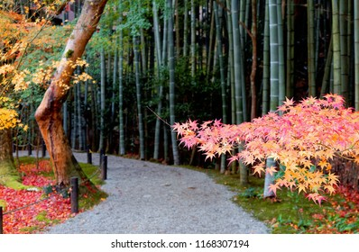 Autumn scenery of a gravel path winding through a bamboo forest with colorful maple foliage in a peaceful zen atmosphere in the Japanese garden of Enkouji, a famous Buddhist Temple in Kyoto, Japan