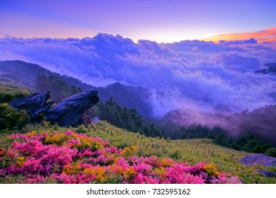 Autumn scenery of Hehuan Mountain Main Peak.With Arrow bamboo field along the Trails of Taroko National Park,Giant Knotweed,cliff(Qixiandeng),sea of cloud with twilight is Taiwan aesthetic sense.Asia.