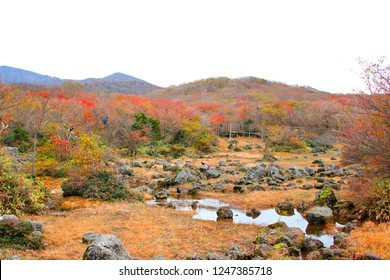 It is the autumn scenery of Jeju 1100 highland wetland