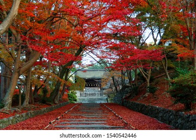 Autumn scenery of the maple trees at the entrance (Sandou) to Bishamon Hall (Bishamondo), a famous Buddhist temple in Kyoto, with fiery foliage by the stairway and red fallen leaves covering the steps