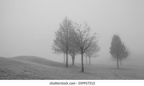Autumn scenery in the morning mist. Black and white  image.
