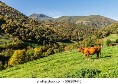 Autumn scenery in the mountains of Leitariegos, Asturias, Spain