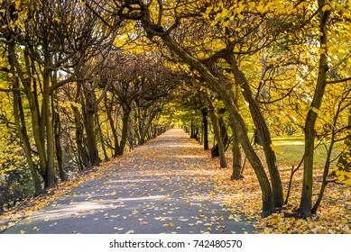 Autumn scenery in the Oliwski park. Park is favorite tourist destination in Gdansk. Poland