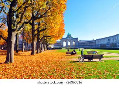 Autumn scenery in park / golden trees