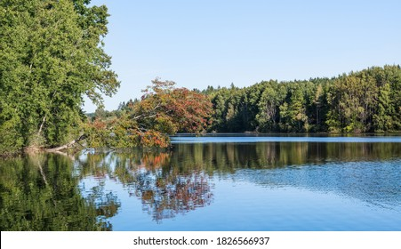 Autumn scenery of pond with fallen tree over blue rippled surface and green forest on bank. Common beech with mirroring red colored leaves on shiny water. Large fishpond near Smyslov in South Bohemia.