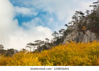 Autumn scenery in remote mountains in Europe, with beautiful foliage and rock hanging pine trees