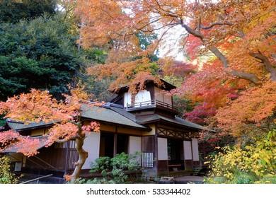Autumn scenery at Sankeien garden, Yokohama, Kanagawa, Japan