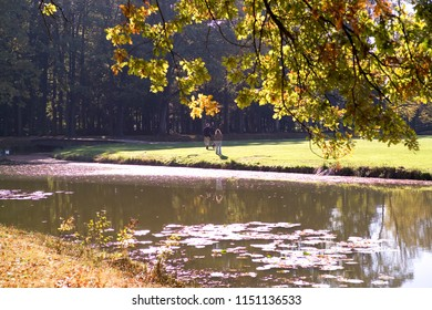 Autumn scenery with trees turning yellow leaves and a pond