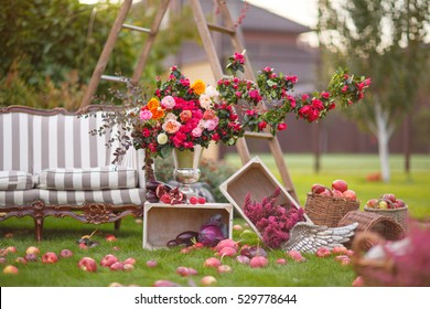 autumn scenery in the yard with sofa,ladder, flowers, apples and a white box