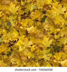 Autumn seamless pattern background. Maple yellow fallen leaves on the ground at sunny day.