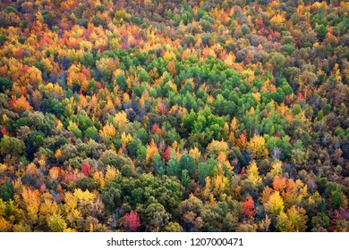 Autumn season background, aerial view of lush maple tree forest showing leaves changing colour during fall season in Quebec, Canada.