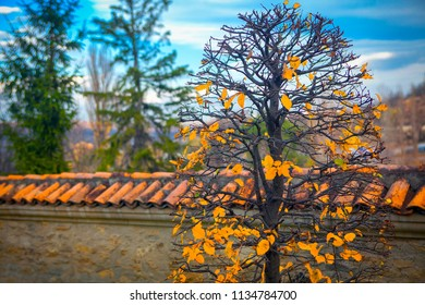 autumn season background with fence and yellow leaves