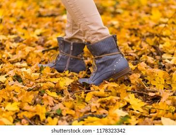 Autumn season with fallen leaf from plane tree.
