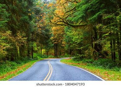 Autumn season in Hoh Rainforest, Olympic National Park, WA, USA. Beautiful unusual natural landscapes