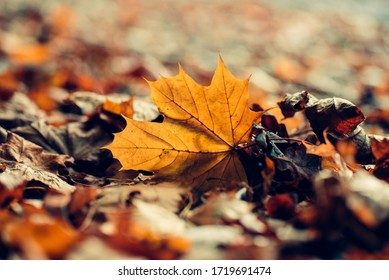 Autumn season leafs, orange and yellow color. Abstract background.