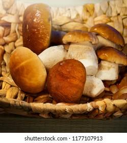 Autumn season, mushroom cep in a basket