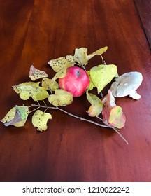 Autumn season set