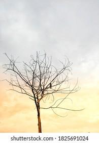 autumn season starting bird sitting on a tree