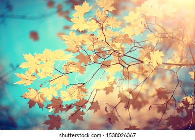 autumn seasonal background, leaves and branches, blurred fall concept