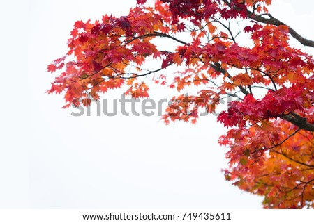 Changing Colors Of Rainy Afternoon In >> Autumn Season The Leave Change Color Red Stock Photo Edit Now