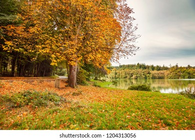 Autumn at Shearwater lake, Wiltshire