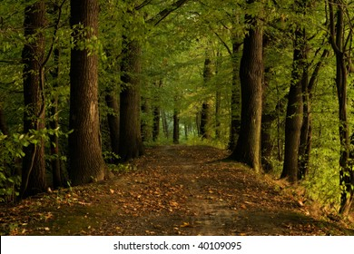 Autumn shot of pathway in forrest