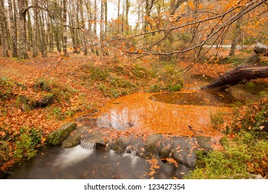 Autumn shot of the portuguese national park of geres