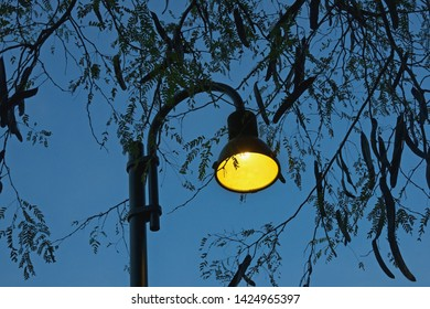 Autumn. Silhouettes of tree branches with leaves and pods and street lamp against  blue evening sky. Branches of Honey locust (Gleditsia triacanthos) tree