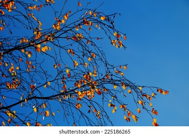 autumn, sky, background.