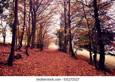 Autumn, Slovakia.