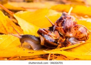 Autumn snail photo with warm temperature colours yellow orange