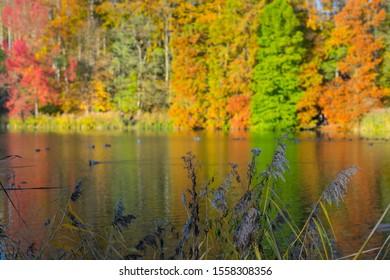 Autumn in the Solvay park nrea Brussels, Belgium
