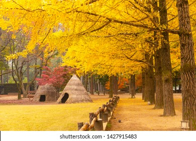 Autumn in South Korea and Ginkgo Tree at Nami Island Chunchon South Korea